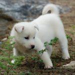 Красивый щенок ищет дом и любящего хозяина