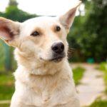 Собачка ДИНА ИЩЕТ СЕМЬЮ