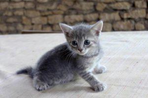 Отдам в добрые руки котика