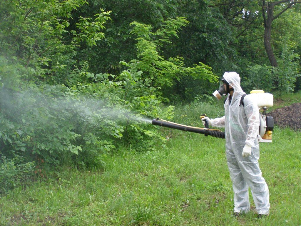 В Выксе будет проводиться обработка от клещей, мошек, комаров, грызунов