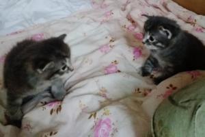 Пушистые котята ждут своих хозяев