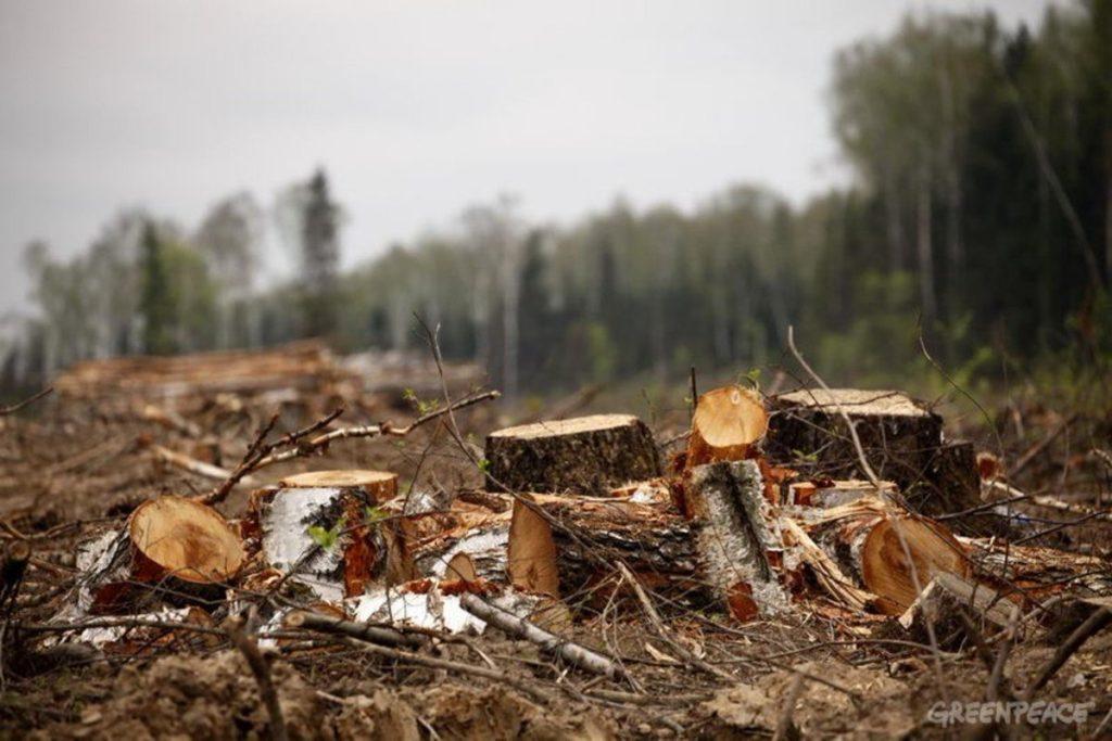 75 гектаров незаконных рубок в Нижегородской области выявлено с помощью космического мониторинга лесов