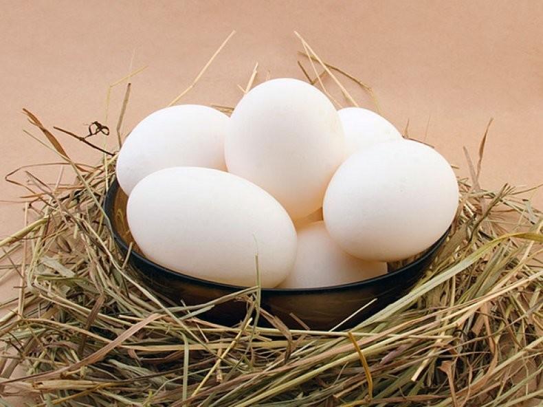 Продам домашнее куриное яйцо