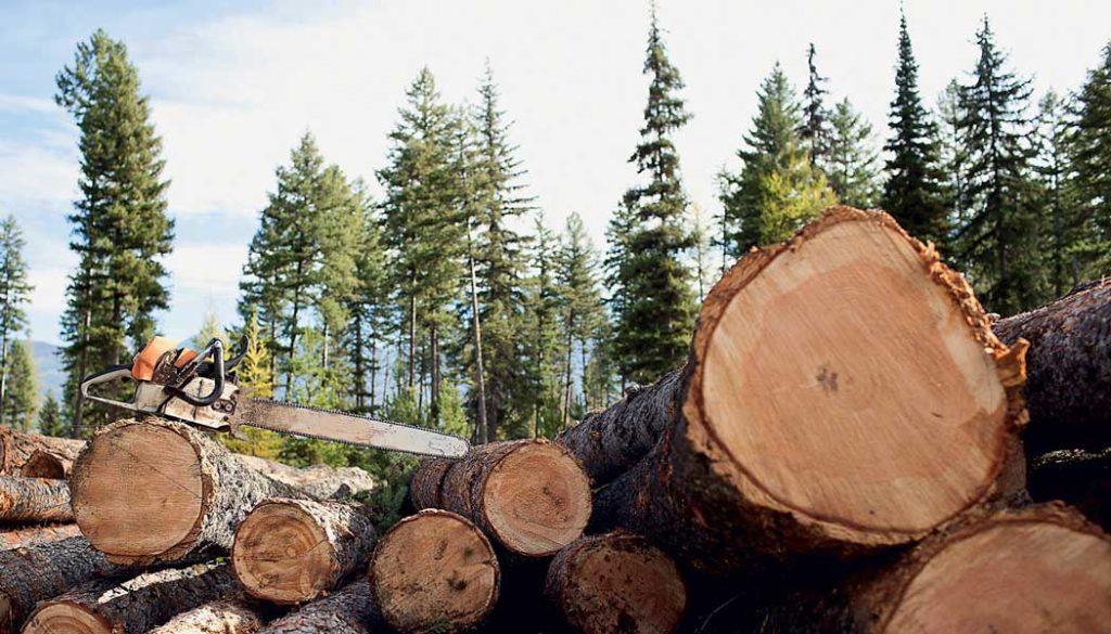 Выксунские полицейские пресекли незаконную вырубку леса