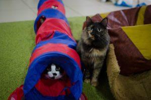 Котокафе закрывается в Нижнем Новгороде и раздаёт кошек